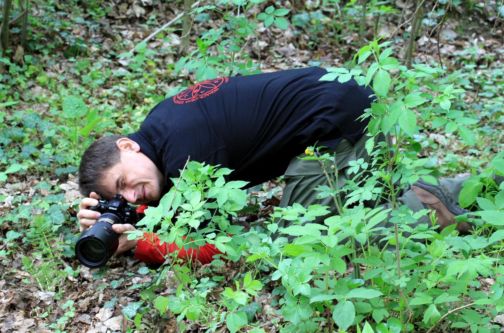 Felsőegerszegi erdőben